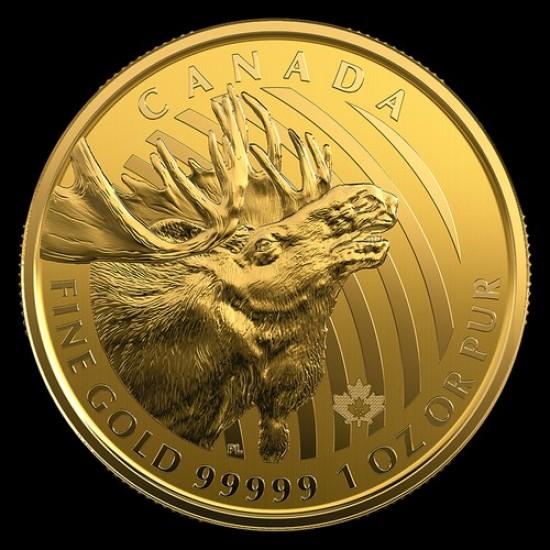 Jávorszarvas 2019 1 uncia 99,999 kanadai arany pénzérme