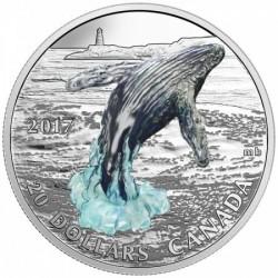 Hosszúszárnyú bálna 3D 2017 1 uncia proof ezüst pénzérme