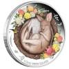 Álmodó állatkák - Kenguru 2021 1/2 uncia színes ausztrál ezüst pénzérme